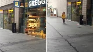 Hilarious Moment Seagull Steals Crisps From Shop