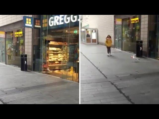 طائر نورس يتسلل إلى متجر ويسرق الطعام