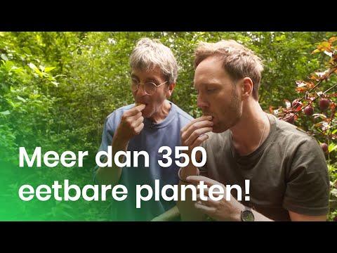 Het voedselbos als toekomst?