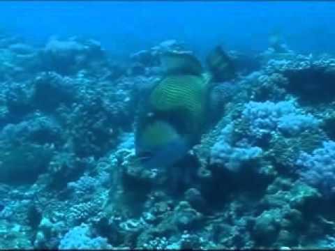 Dive Dream Divers, Dive DreamDiving Center,Trou aux Biches,Mauritius