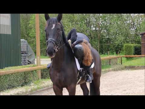Das Mädchen der Pferdeerreger in