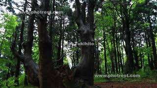 幻想の森の動画素材と4K写真素材