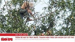 Trộm xe máy bị truy đuổi, nam thanh niên trèo lên ngọn cây cố thủ
