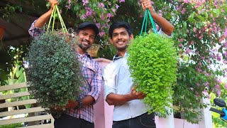 Fast Growing Hanging Plants| Beautiful Cascading Plants In Malayalam
