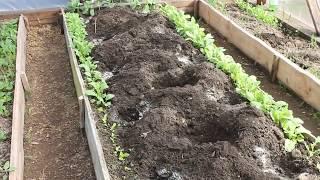 Как подготовить грядку под посадку  томатов. Что внести в лунку.