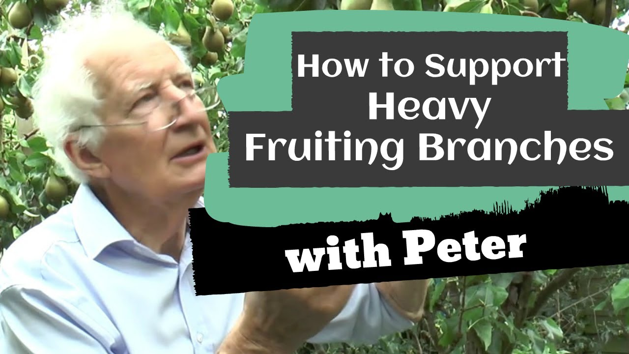 Supporting Heavy Fruiting Branches