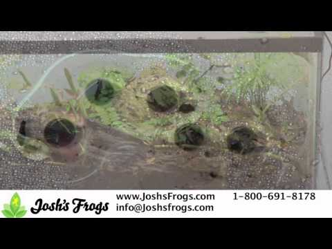 How to Prevent Dart Frogs from Breeding