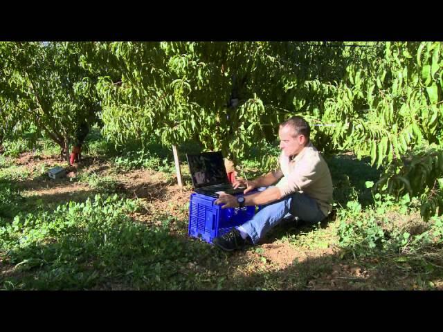 Irrigation des vergers - Projet expérimental par goutte à goutte enterré