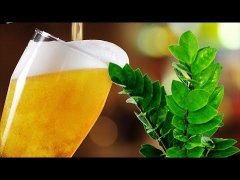 Пиво для комнатных растений. Растут как на дрожжах или…?