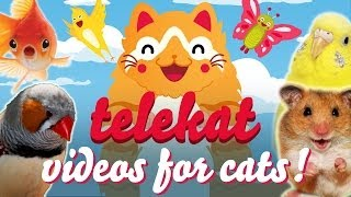 The Greatest Video For Cats Ever Told | Telekat:  ~(=^‥^)/