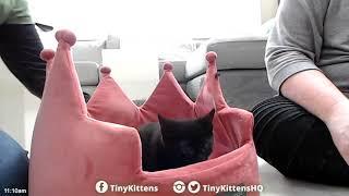 Big update and Luke packs his #TinySuitcase - TinyKittens.com