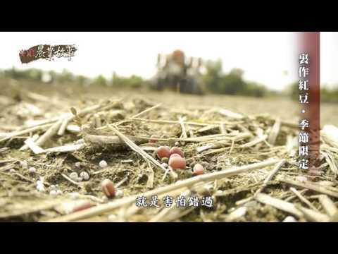 農業故事館-紅豆