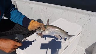 Catch And Cook Saltwater Catfish | Trash Fish Taste Test