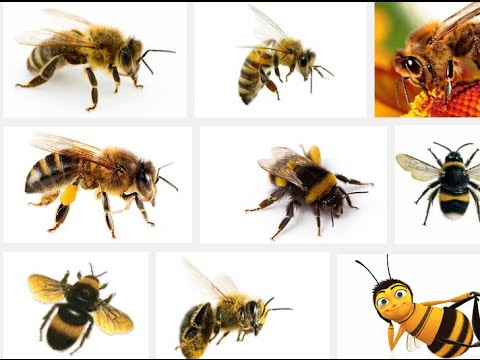 bees, dream of bees, dream about bees, dream bees, meaning of bees dream