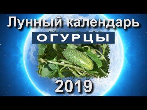 Лунный календарь огородника на 2019 год.  Когда сажать рассаду огурцов в 2019 году