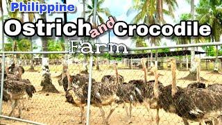 Philippine Ostrich and Crocodile Farm in Opol Misamis Oriental | Grazee Anya Travels