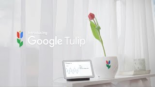 Google Nederland - Introducing Google Tulip