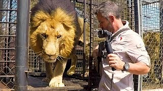 Lions Need Patience | The Lion Whisperer