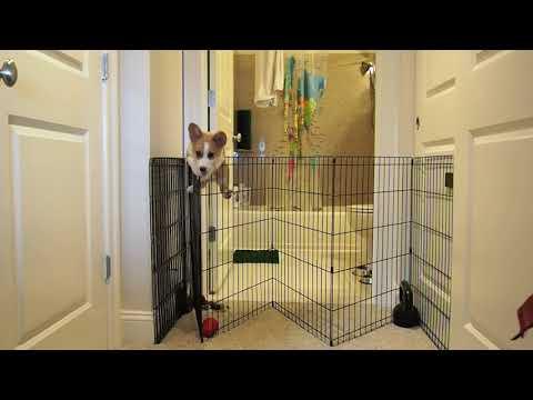 הסרטון הכי חמוד שתראו היום: גור כלבים מסג קורגי מטפס על גדר ובורח מכלוב