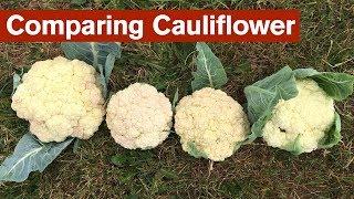 Comparing Cauliflower From 4 Different Gardens