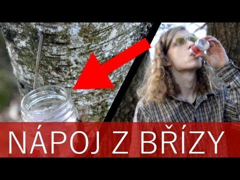 BŘEZOVÁ MÍZA: Sladký nápoj ze stromů!