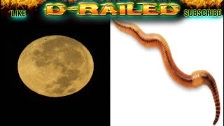 FULL MOON March 2020 Full Worm Moon Meaning First SUPERMOON in 2020 March 9 2020 Non Meditation