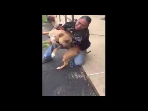 Мужчина находит свою украденную собаку через два года. Пес на небе от счастья