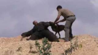 Personal protection dogs training - כלבי תקיפה