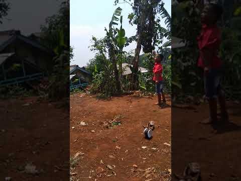 #Cibinong #Bogor Belajar nerbangin layang-layang (Layangan) #Ferdi