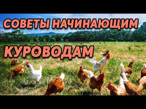 , title : 'Куры несушки . 5 советов новичкам. Содержание, кормление, профилактика заболеваний.