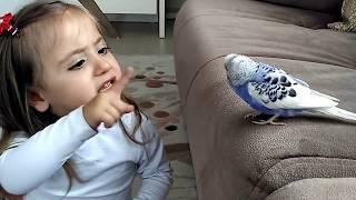 Muhabbet Kuşu Ve Minik Kız Mutlaka İzleyin