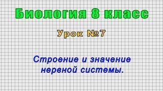 Биология 8 класс Урок 7