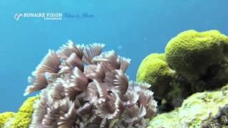 Bonaire Vision Films   Bonaire Marine Park trailer