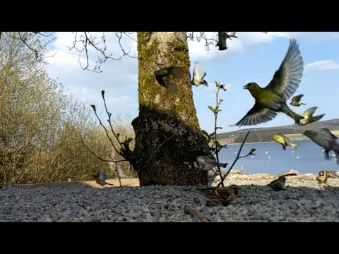 Google Pixel 3 Camera Video Slow Motion test - Birds at Llyn Brenig