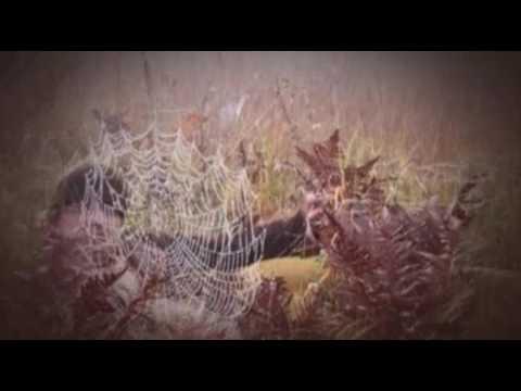 I colori della passione 2011 guarda il film italiano
