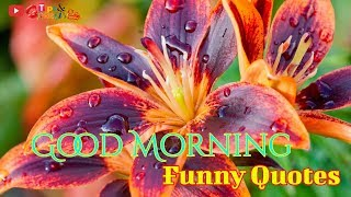 Good Morning Funny Quotes Videos || Good Morning Quotes Whatsapp Video