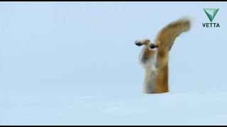 Бешенство среди животных. Бисер от 20 февраля