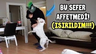 AMSTAFF TYSON'A ŞAKA YAPMAYA KALKINCA BU SEFER AFFETMEDİ!!
