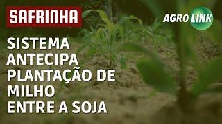 ANTECIPE: plante milho antes de colher a soja