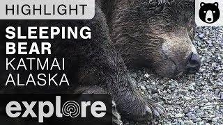 Sleeping Brown Bear - Katmai National Park - Live Cam Highlight