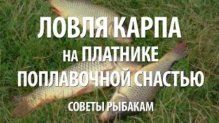 Платная рыбалка в триале подмосковье без нормы вылова