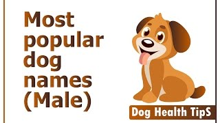 most popular dog names 2016 (dog health tips)