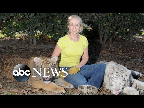 Animal sanctuary founder injured by 2 bengal tigers she raised