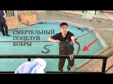 ПОЦЕЛУЙ ПОЛОЗА # ЯДОВИТЫЕ КОБРЫ # ГИГАНТСКИЙ ПИТОН