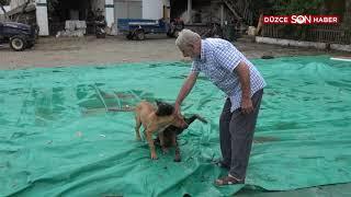 Kaz İle Köpeğin Örnek Arkadaşlığı