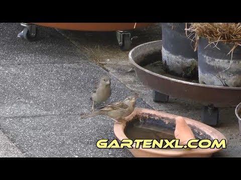 Video die Parasiten in der Ferse