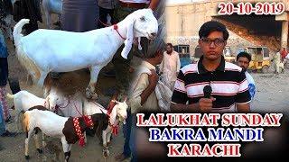 Lalukhet Sunday Bakra Mandi Karachi 20-10-19 Latest Updates (Jamshed Asmi Informative Channel)
