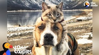 Dog Comforts His Cat Brother In The Cutest Way - HENRY & BALOO | The Dodo Odd Couples