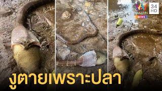 งูกินปลาหมอตัวใหญ่ สุดท้ายตายทั้งคู่