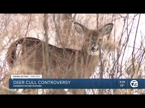 Animal rights activists, hunters opposed to controversial deer cull at Kensington Metropark